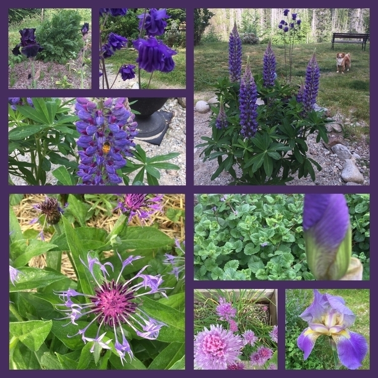 Purple garden!!! beautiful Mond - laurabalducci | ello