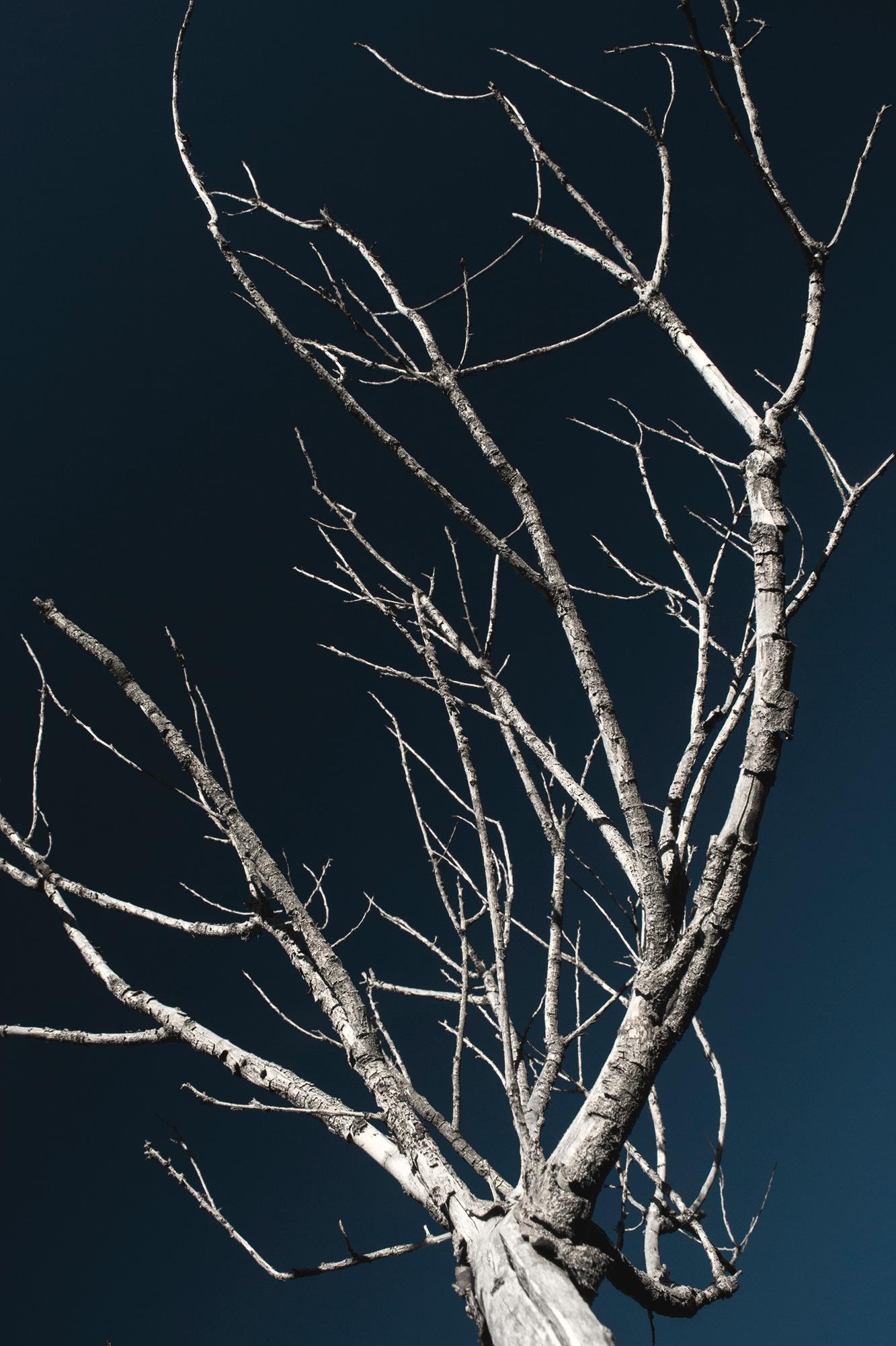 celebration Tree - treveo | ello