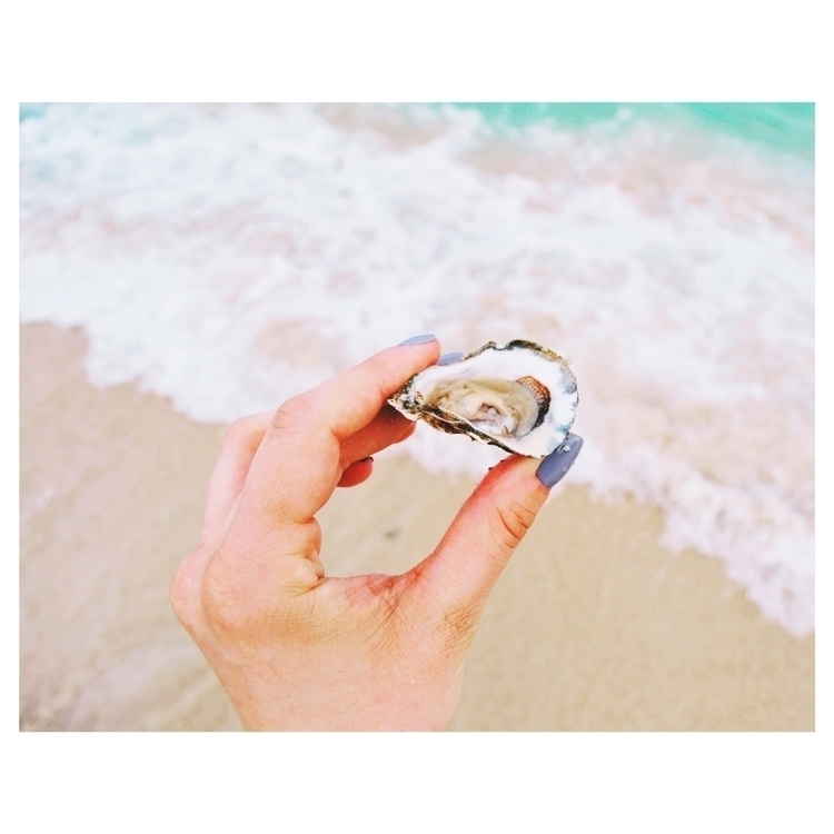 Oyster - fresh sea - oyster, vacation - olivia_m | ello