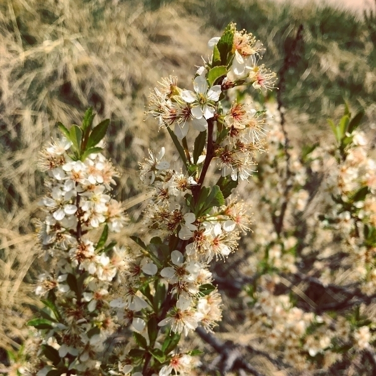 Denver Botanical Gardens - naturephotography - vpixiefilm | ello