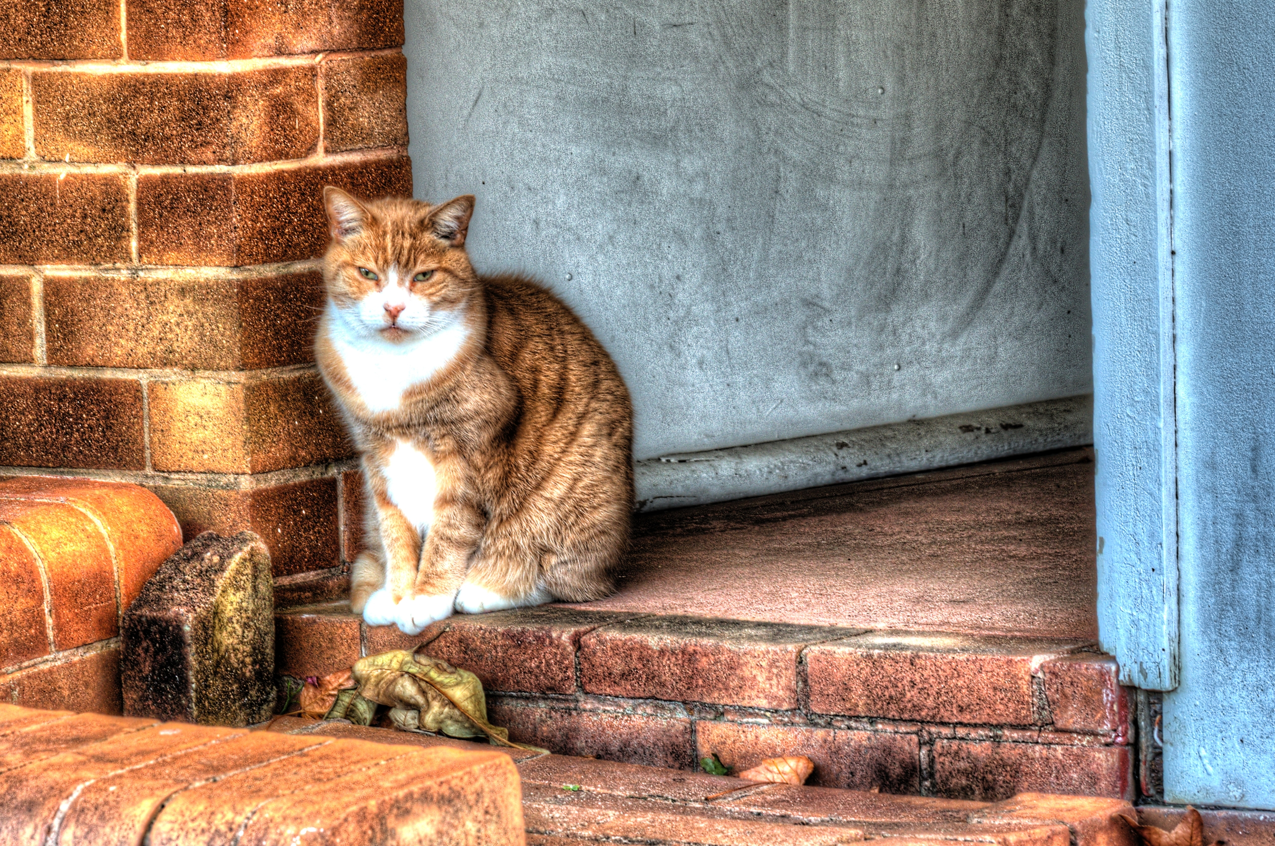 Neighbourhood Watch Cat Sydney - zookiemommy | ello