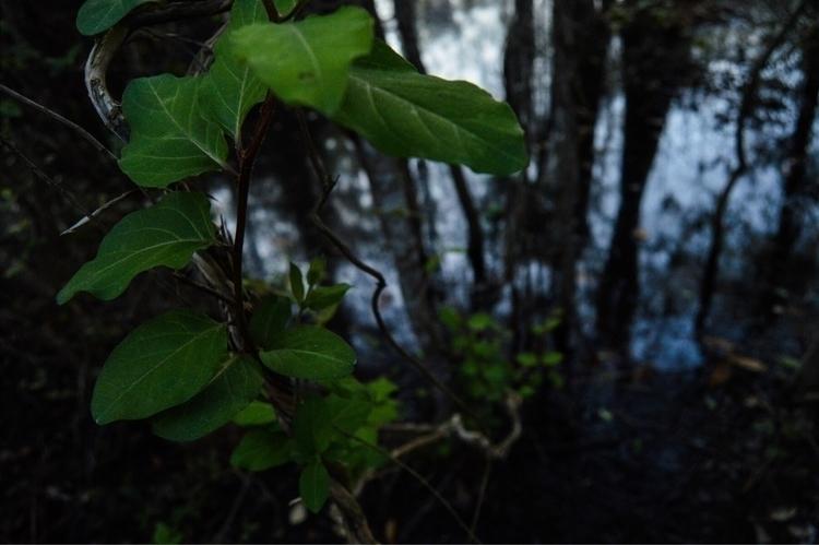 Breathe leaves assuming Eyes cl - sketch_study | ello