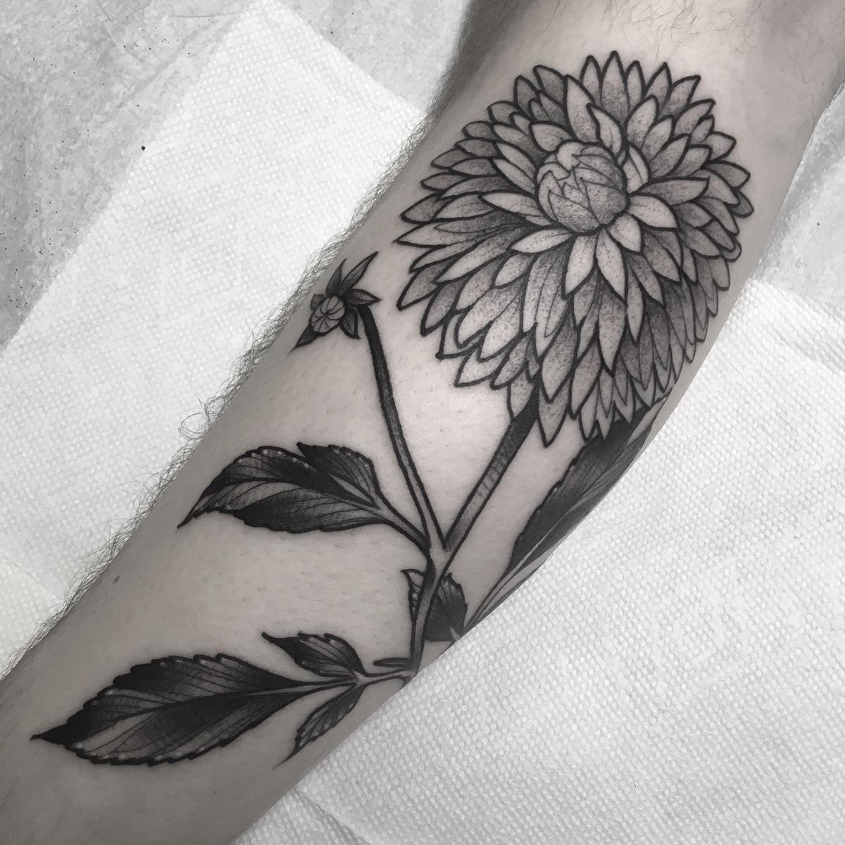 tonight Adam! trust - flower, dahlia - blaynebius | ello