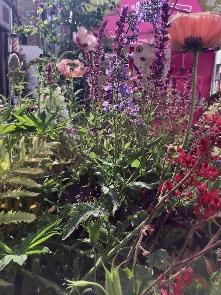 resist abundance blooms show ga - empyreane | ello