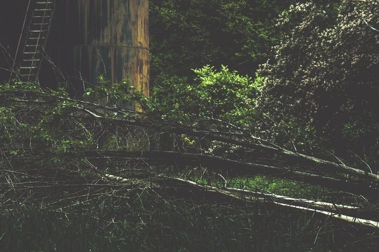 fence trees stairs - photography - iangarrickmason   ello