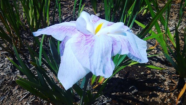 Iris - gushax2 | ello
