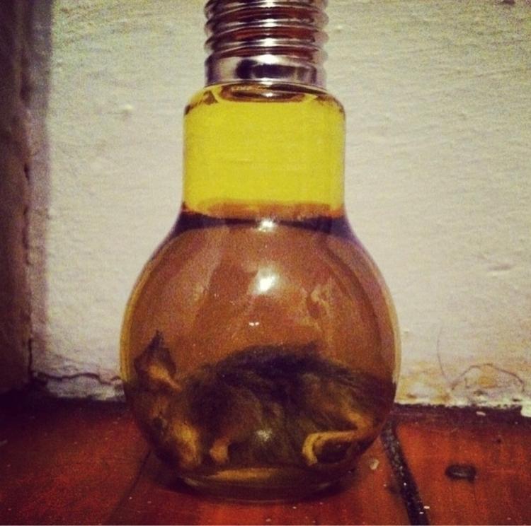 sale. Animals dead recycled - hgtandbone | ello