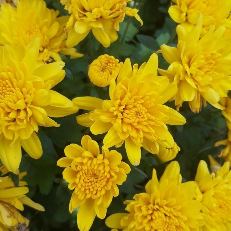 garden calms centers - flowers, spring - mysticearth   ello