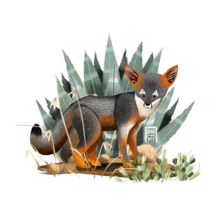 Island fox - illustration - doodlesmarc | ello