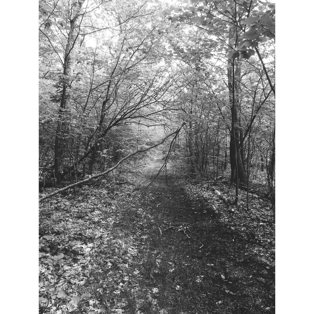 Nature carves path. Stephanie M - step-on-me | ello