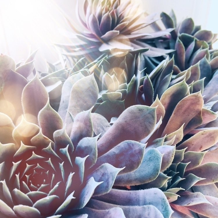 succulent babies - boho, bohemian - the_opaque | ello