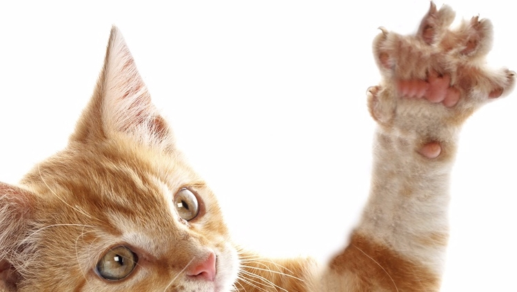 Cat Scratch Fever - MH, BPD, CatScratchFever - speedykitty | ello