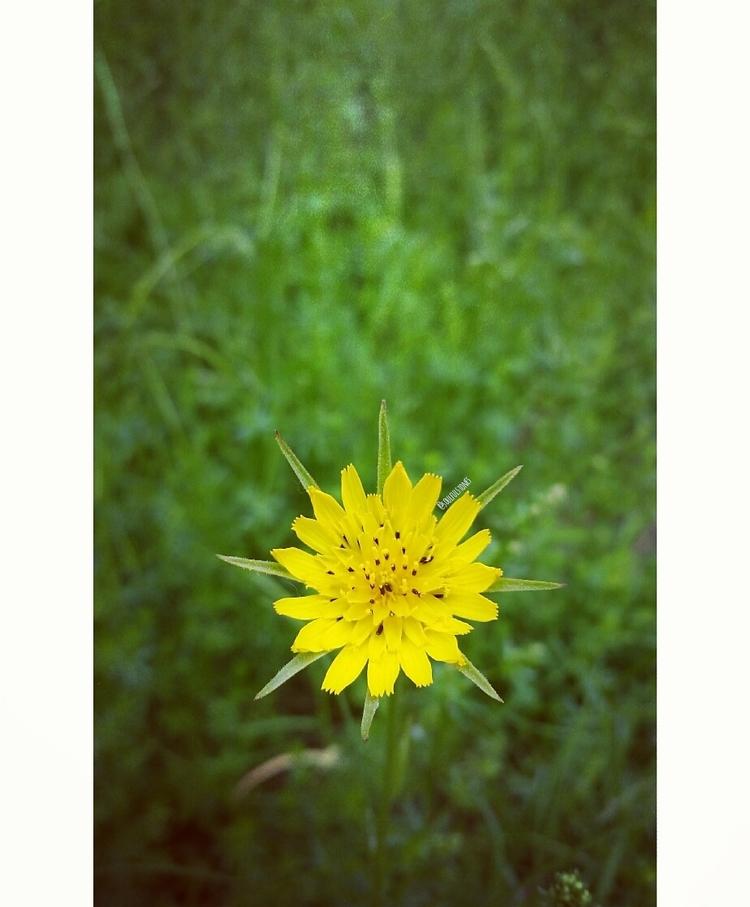 || love nature, find beauty .va - soulfulstones | ello