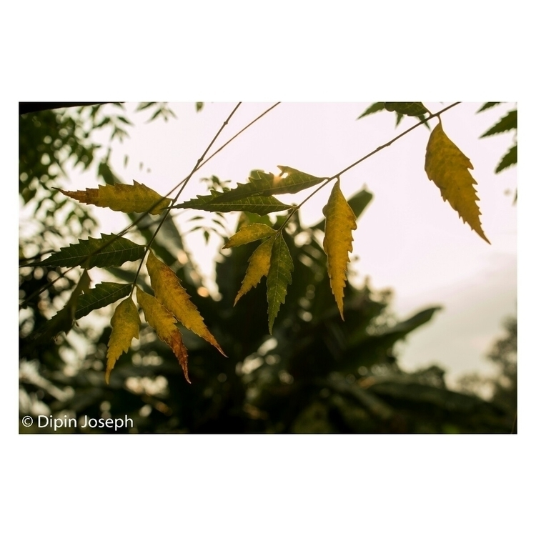 leaves, yellow, green - dipin_joseph | ello