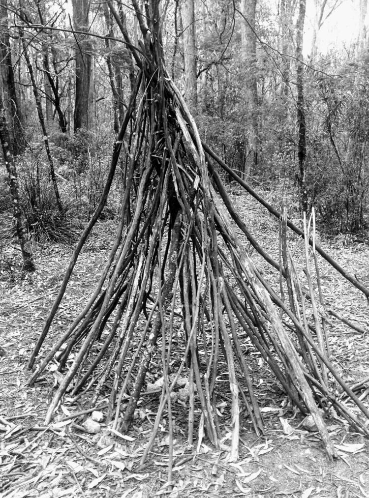 monga forest - charleysforestsilver | ello