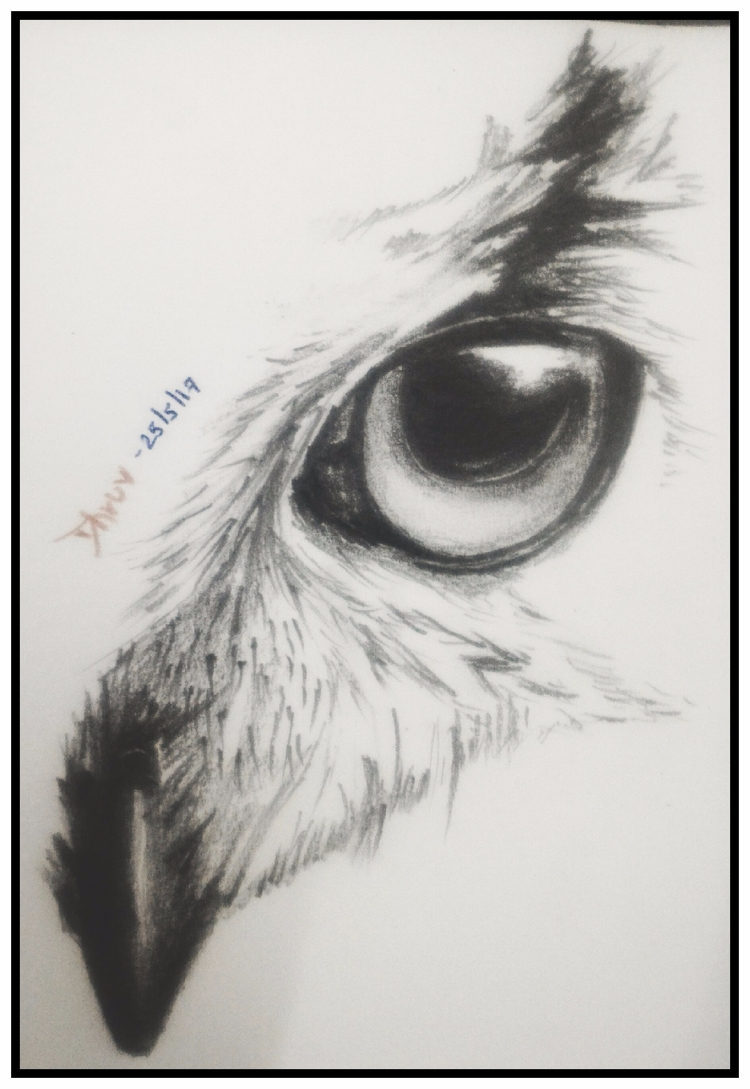 Owl :) page check website drawi - kiridhruv | ello