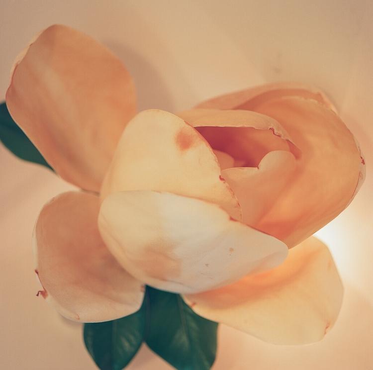 magnolia, ihateflowers, shotonfilm - teetonka   ello