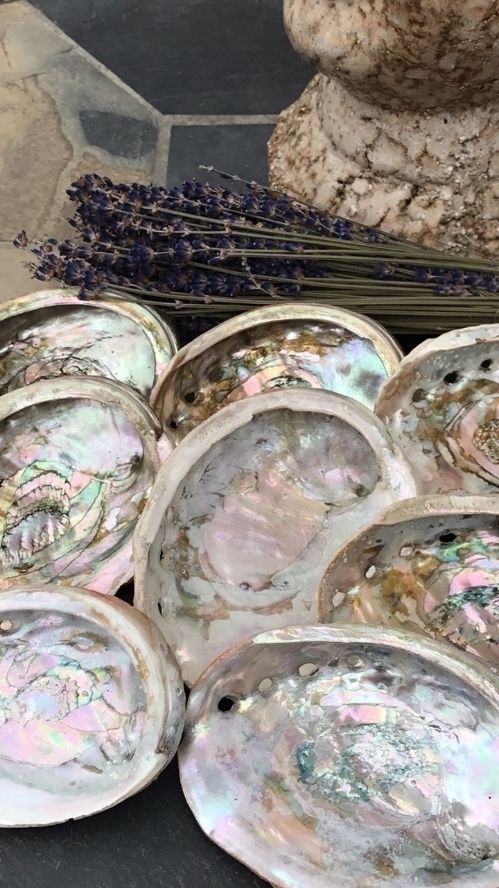 Abalone Shell colorful shell in - godsheavenlyscents | ello