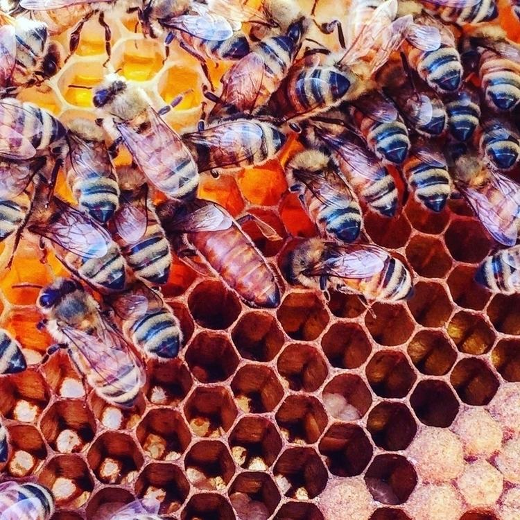 queen bee - naturalbeekeeping, warrebeekeeping - bearfootbeekemily | ello