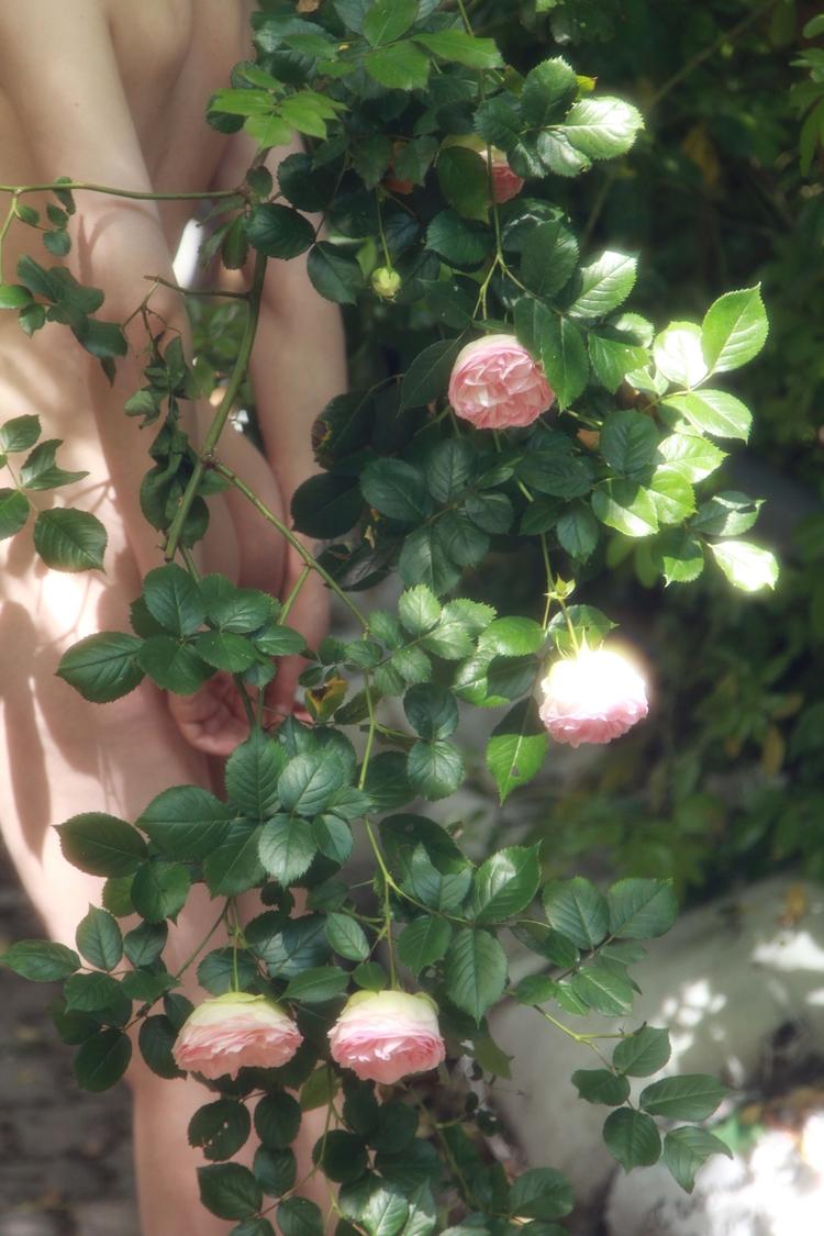 Roses Jelena :copyright:amaryll - amaryllisj | ello