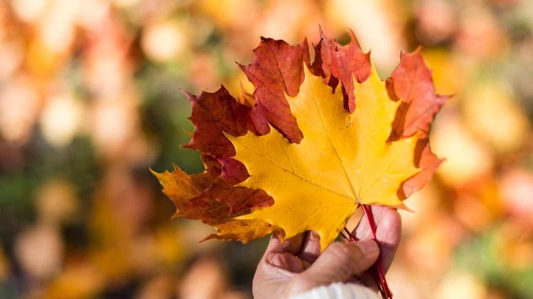 Herbst - elbacho | ello