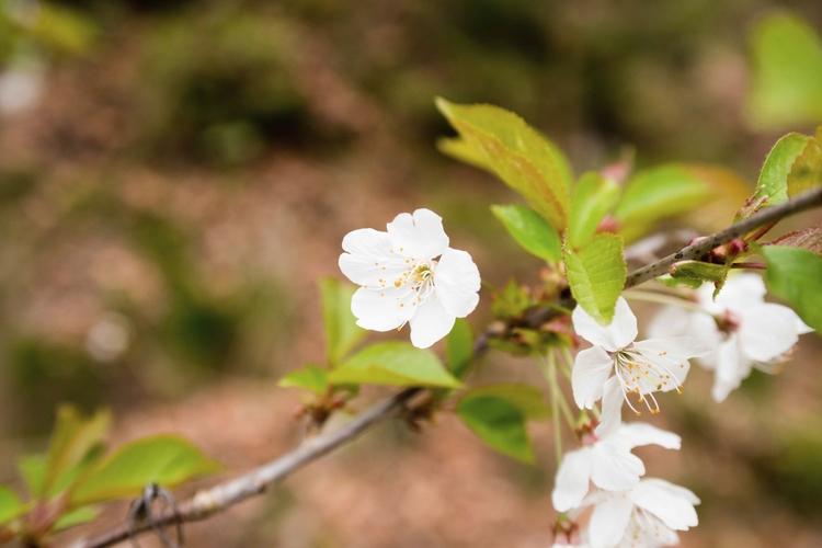 Frühling - elbacho | ello