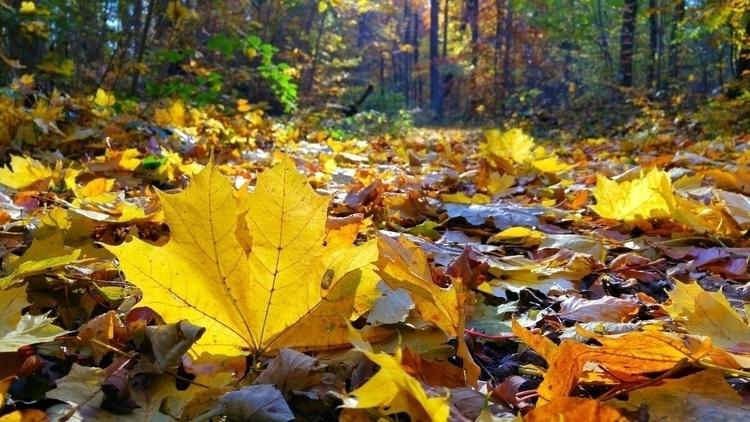 Herbst - elbacho   ello