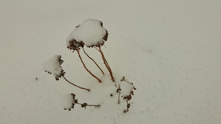 Winter - elbacho | ello