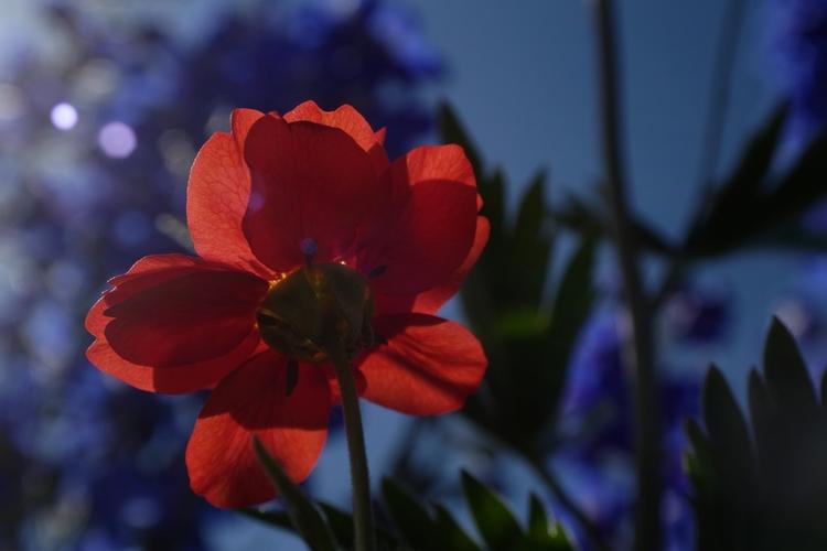 Vedette du jour - photography, flower - cm1ele | ello
