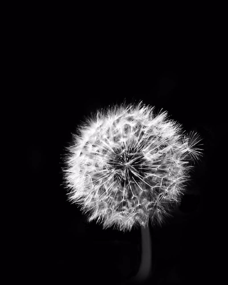 seed leads pack - blackandwhitephotography - brookeryan | ello