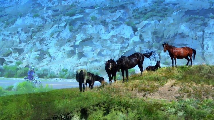 Biking Wild Horses Theodore Roo - jmbowers | ello