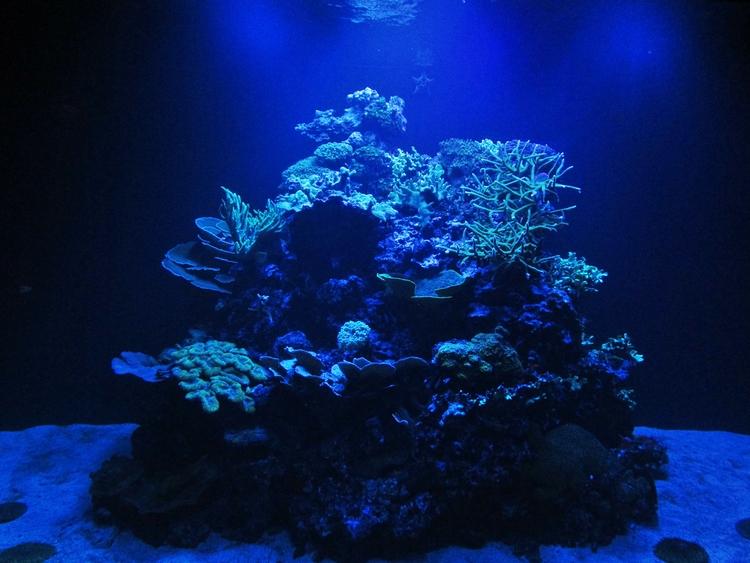 ✮ Deep Blue Sea Time year: Janu - dekodex | ello