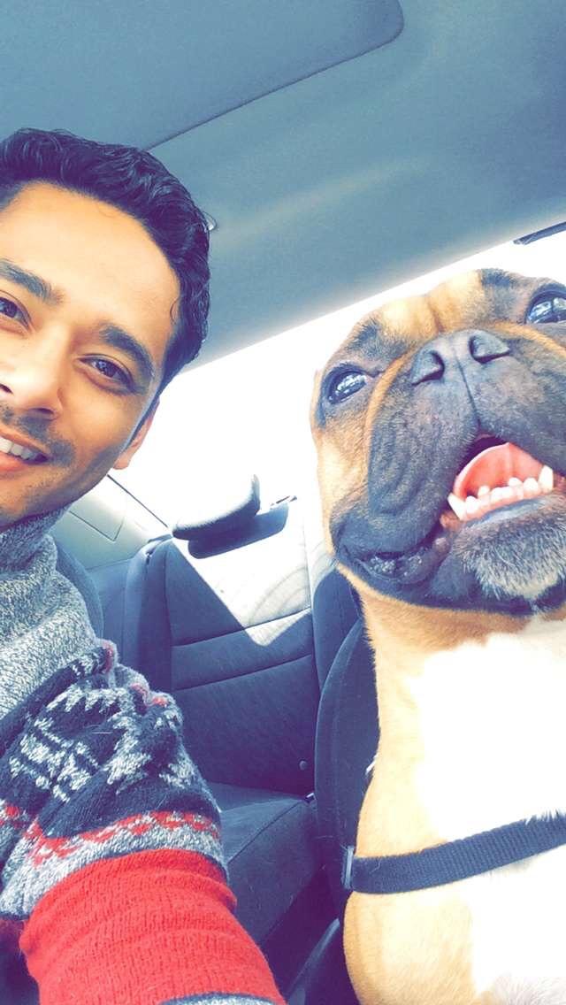 Prince - frenchbulldog - relax562 | ello