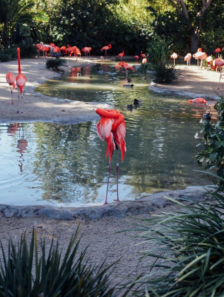 Tfw shy flamingle | San Diego Z - toriamia | ello