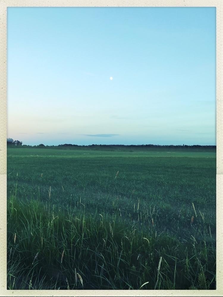 moon - bike, night, fields, nature - yogiwod   ello