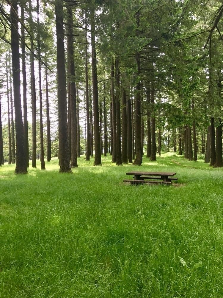 Lonely picnic. Bald Peak park.  - philip_higgins | ello