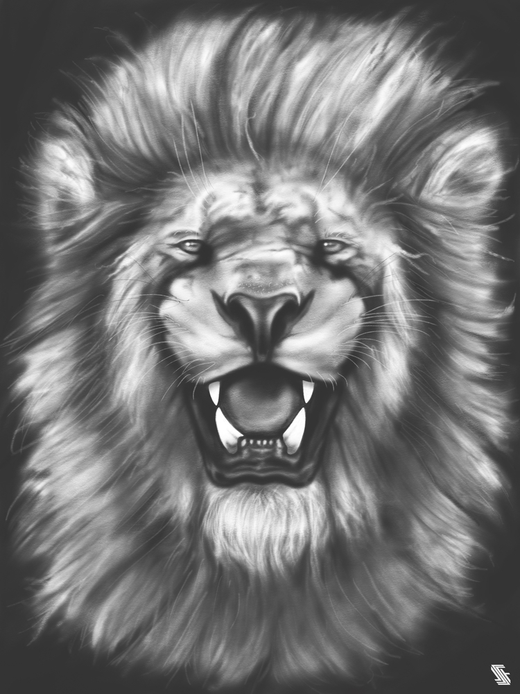 Lion illustration - lion, lions - jstoutillustration | ello