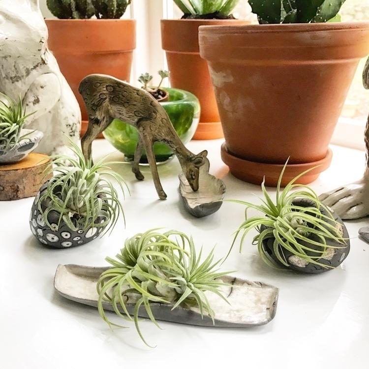 raku trays cubbies plants jewel - highyieldstudio | ello