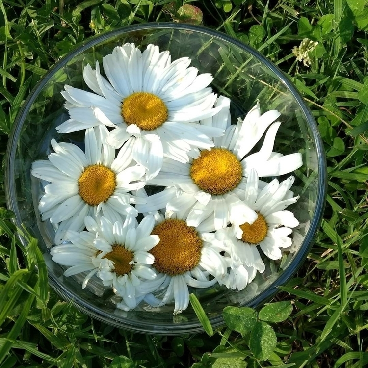 Essence shop! Daisy excellent e - naturalwitchapothecary | ello