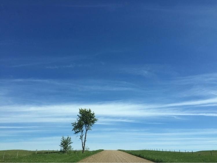 Prairie Island - skyporn, tree, gravelroad - markreierson | ello