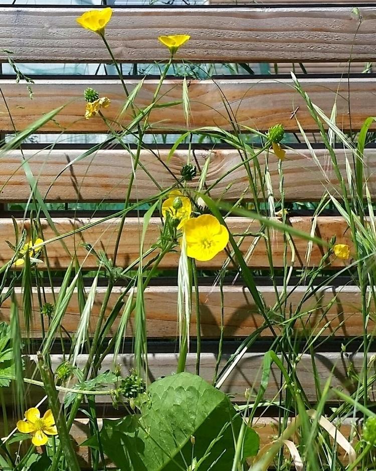 flowers, streetside, yellowgreen - aleksaleksa | ello