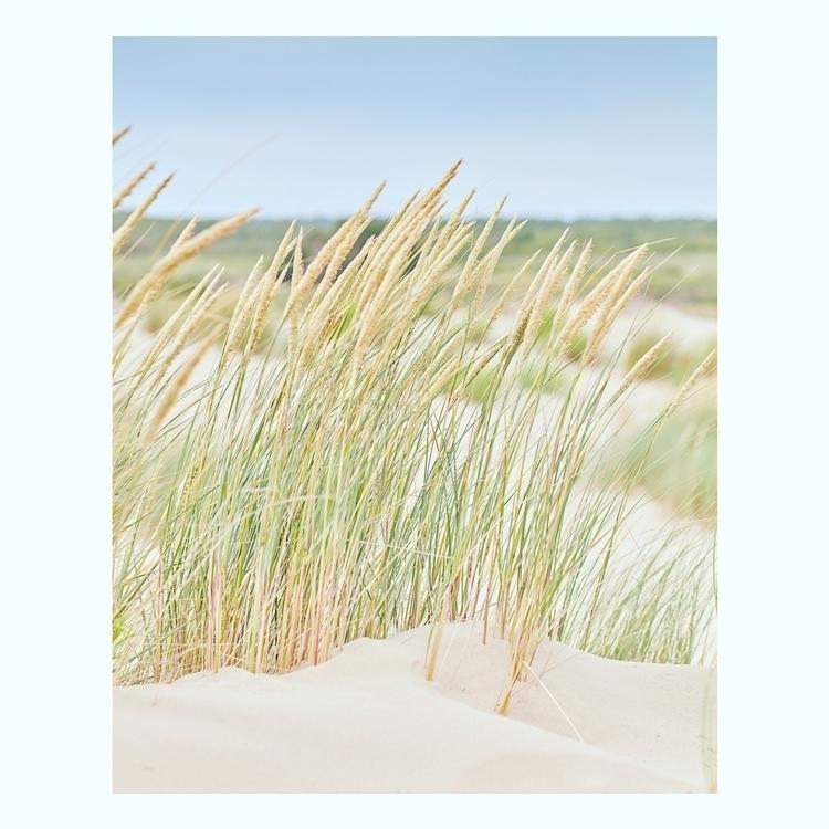 oleron, beach, france - bentomwyemji | ello