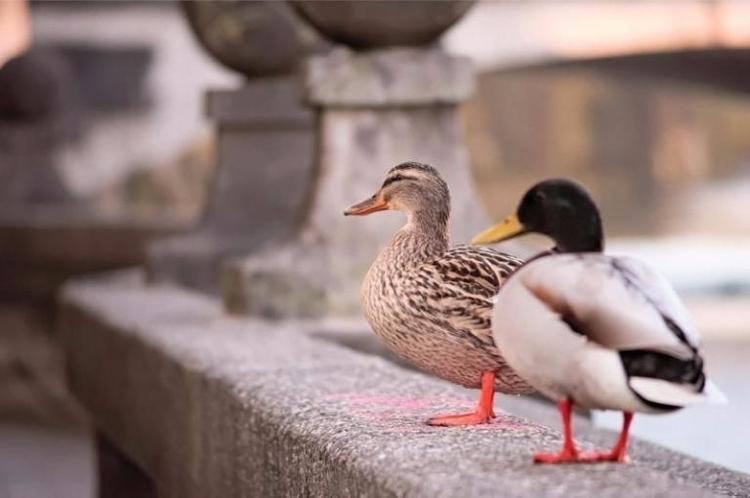 ist photo March 2017. love duck - blandyna   ello