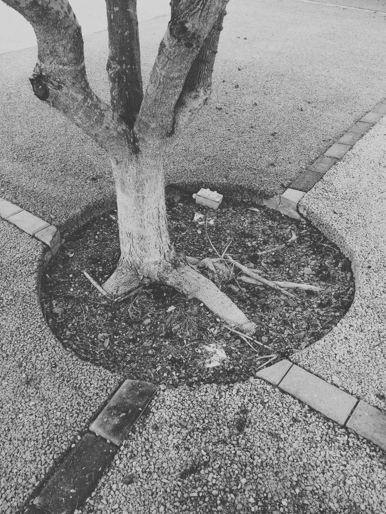 tree, blackandwhite, cement, ground - todovisual | ello