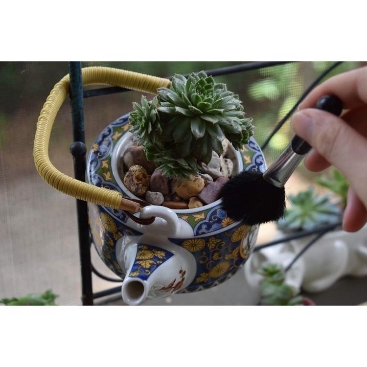 personal teapot =3 - bonsai - succsbyles | ello