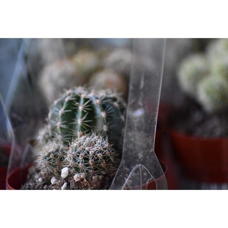 ready plant =333 custom plantin - succsbyles | ello