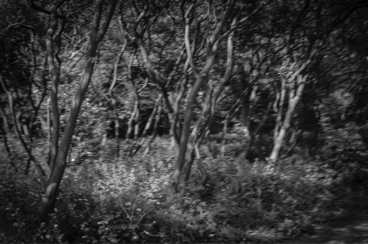 Untitled, Woods woods white pho - petarmilic   ello