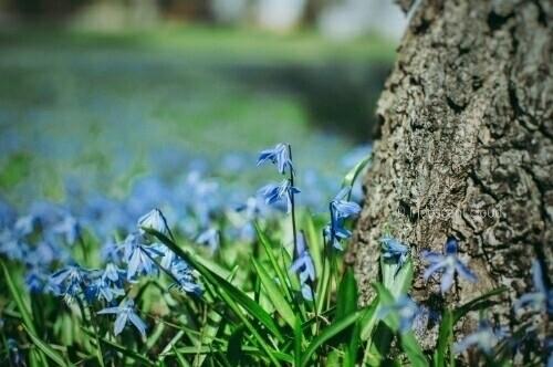 blue meadows Nikon DSLR D3200.  - iridescentcloud   ello