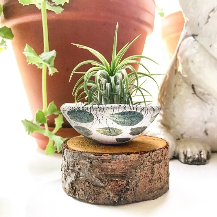 ceramic dish air plant - raku, rakupottery - highyieldstudio | ello
