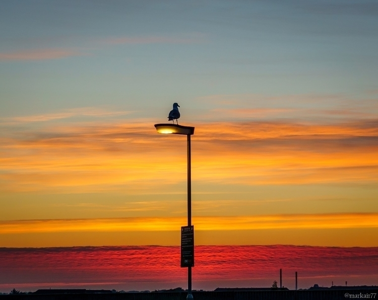 seagull dawn west coast Denmark - markair | ello